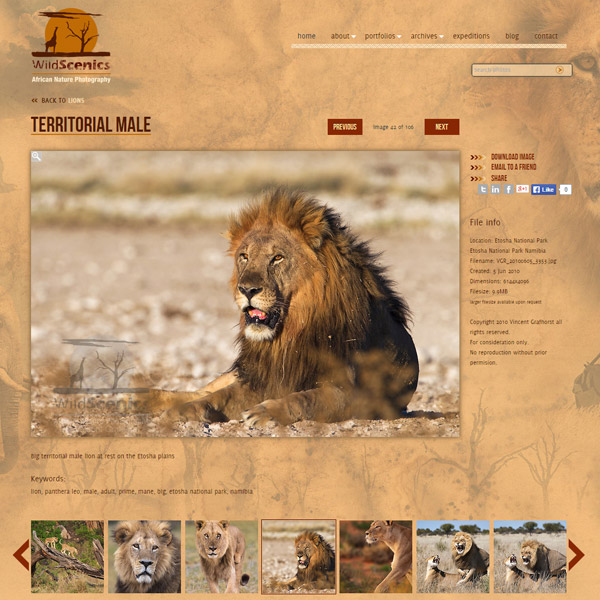 Custom-Photoshelter-gallery-image-page-with-filmstrip